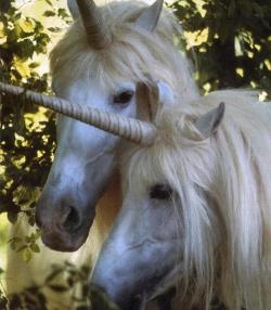 unicorns-e1439304951803